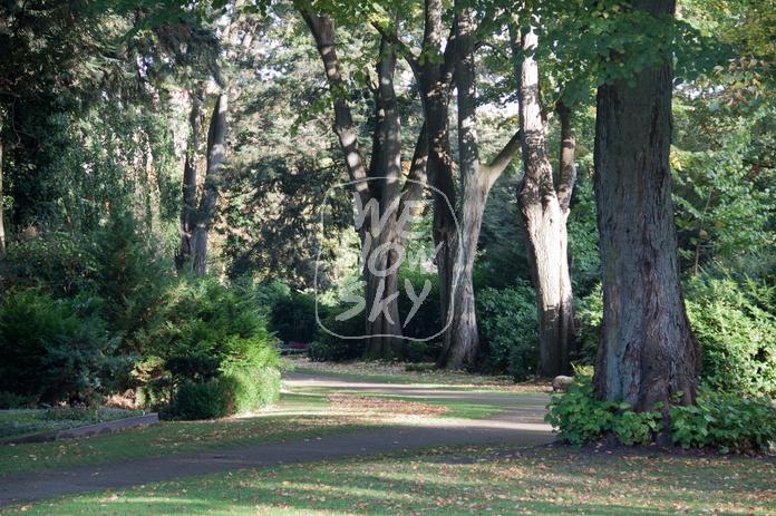 Friedhofsweg mit Bäumen