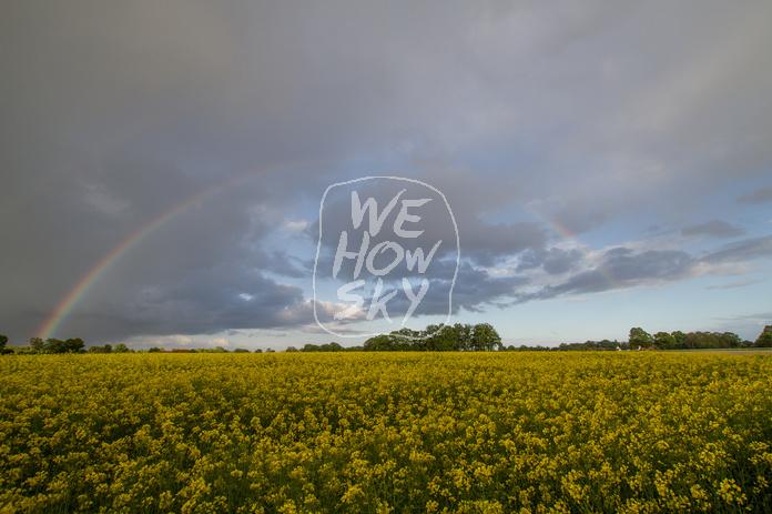 Regenbogen hinter Rapsfeld