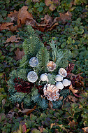 Herbstliche Grabpflanzen