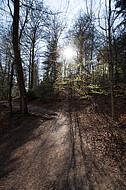 Licht durch Bäume