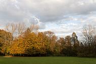Gelbe Laubbäume