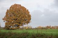 Einzelner Herbstbaum
