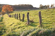 Stacheldrahtzaun mit Holzpfosten