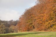 Herbstlichtung