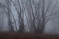 Niederwald im Nebel