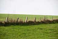 Weidezaun mit Holzpfosten