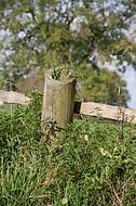 Weidezaun aus Holz