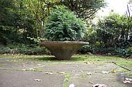 Friedhofspflanze