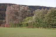 Busch- und Baumreihe