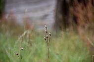Trockene Blüten