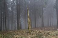 Teuto Nebelwald