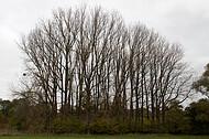 kahle Baumreihe