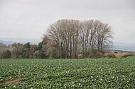 Blick über Kohlfeld