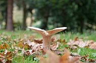 Pilze auf Friedhof