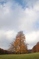 Baumpaar auf Ochsenheide
