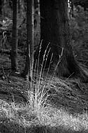 Waldgräser im Gegenlicht