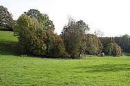 Baumoase in Wiese