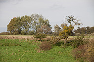 Entlaubter Baum