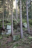 Nadelwald lichtdurchflutet