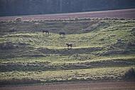 Pferde am Hang