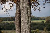 Baum vor Weserbergland