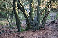 Alter verwachsener Herbstbaum