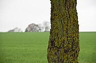 Horizontlinie und einzelner Baum