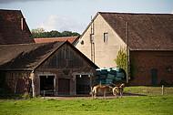 Bauernhof mit Pferden
