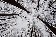 Bäume vor Himmel