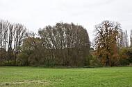 Herbstbaumreihe