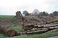 Baumstämme- und Stümpfe