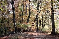 Buchenherbstwald