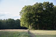 Waldecke