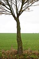 Herbstbaum einzeln