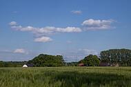 Blick über Kornfeld