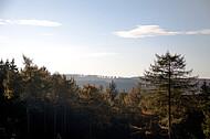 Blick über Nadelwald