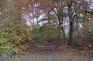 Sitzbänke im Herbstwald