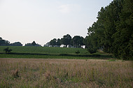 Uferflächen Johannesbach