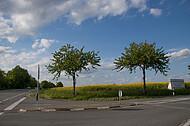 Straßenkreuzung am Rapsfeld