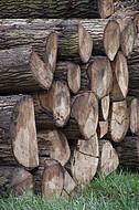 Holzstammstapel
