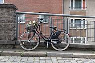 Hollandrand an Gitter