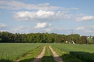 Wald hinter Kornfeld