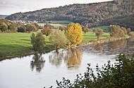 Bäume an Weserufer