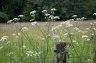 Stacheldraht vor Blumenwiese