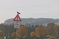 Straßenschild mit Vogel