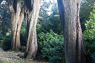 Friedhofsbäume