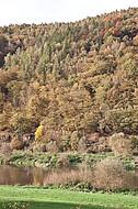 Herbstliches Weserufer