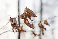 Frühlingserwachen im Buchenwald