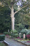 Großer Friedhofsbaum