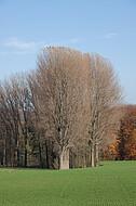 Kahle Bäume vor Herbstwald